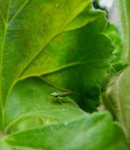 midori-frog's Profile Picture