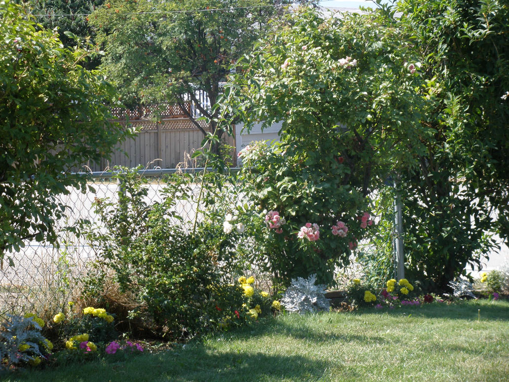 trees to plant in yard. Black Bedroom Furniture Sets. Home Design Ideas