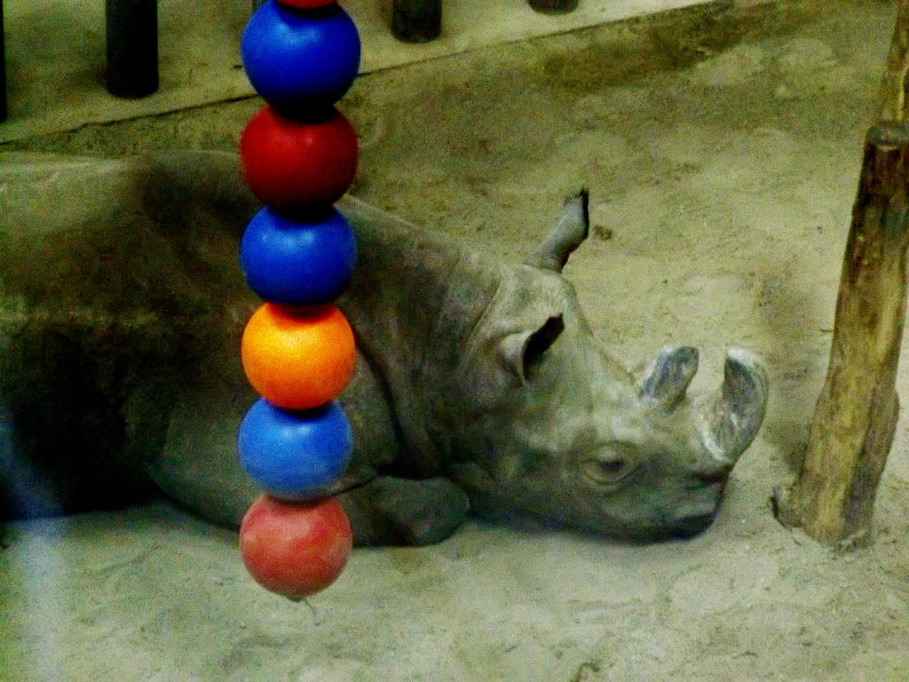 Western Black Rhino, Officially Extinct by volpe-artica
