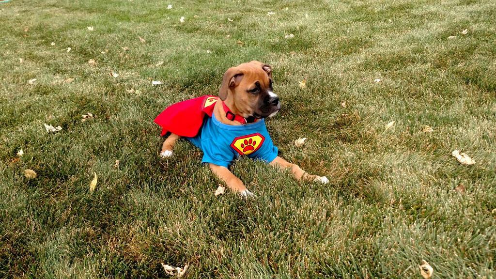 super puppy by volpe-artica