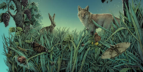 Meadow - label illustration commission