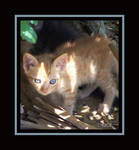 Blue Eyes by SassyPants61762