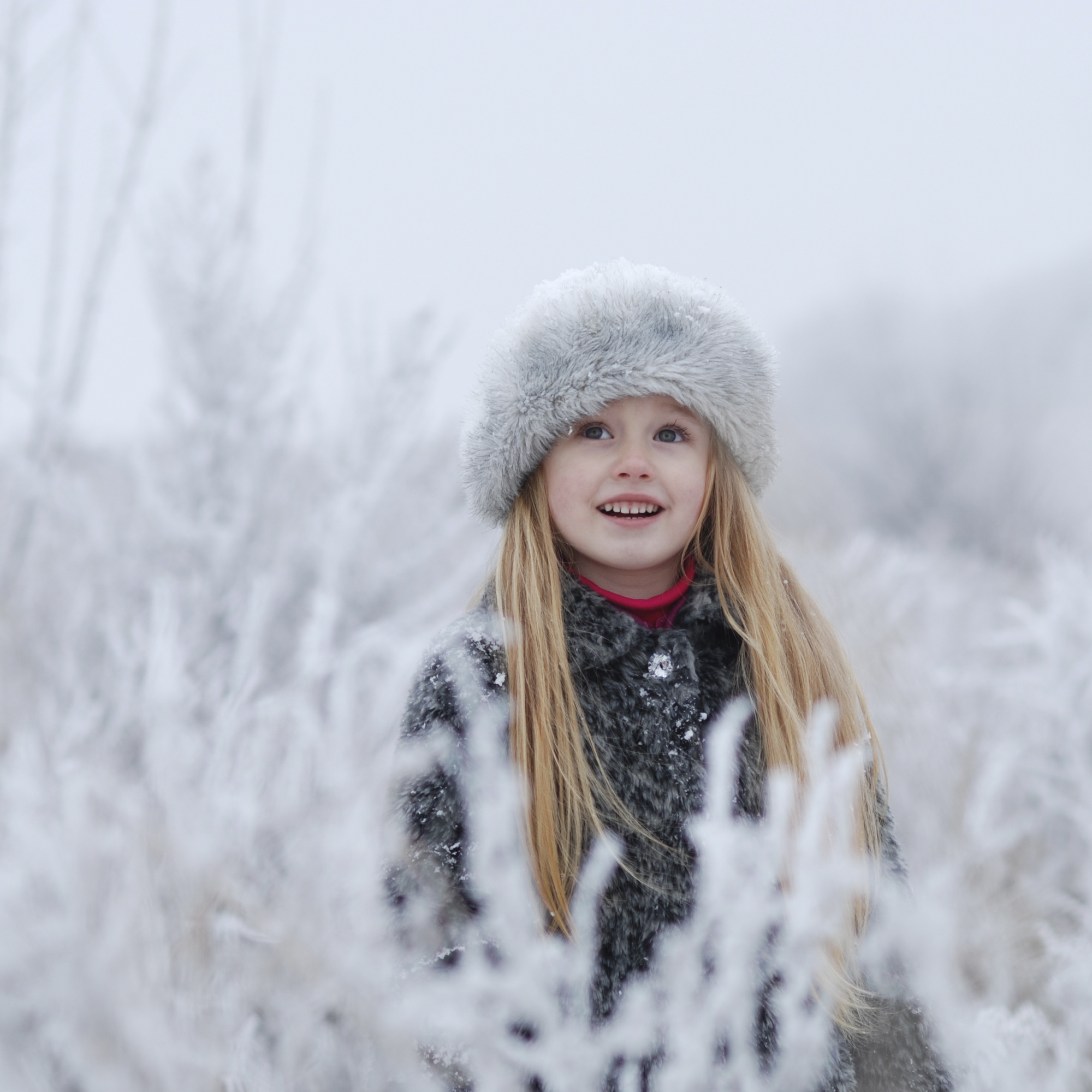 Frosty morning. winter_4