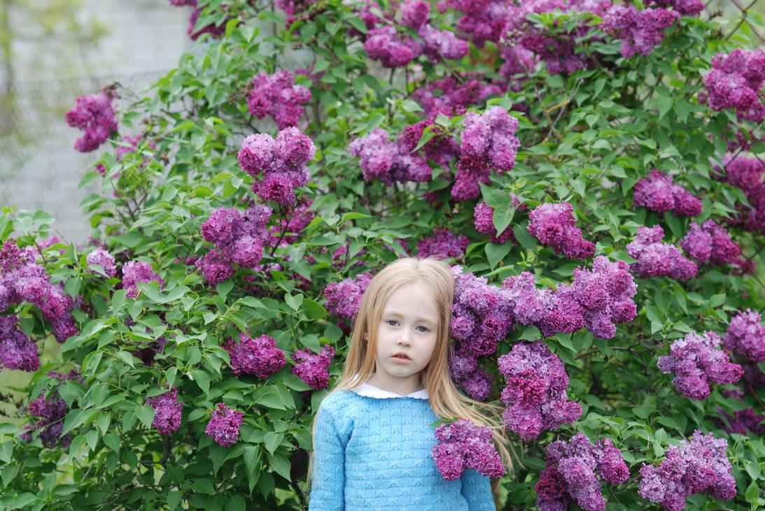 lilac Bush_1 by anastasiya-landa