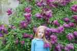lilac Bush_1