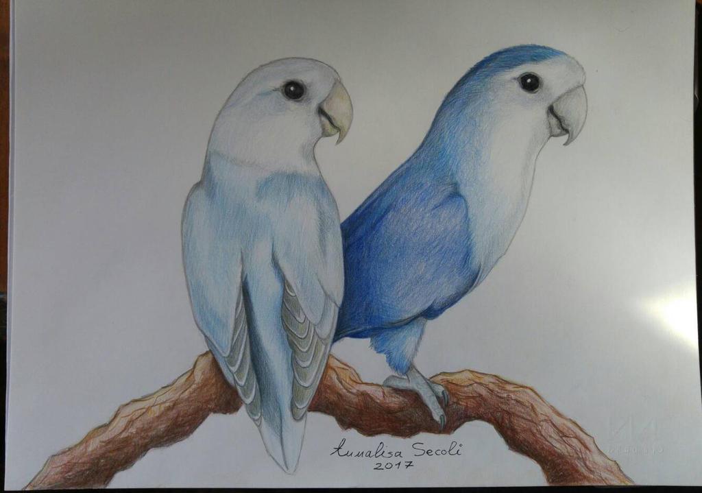 Blue lovebirds by Ceril91