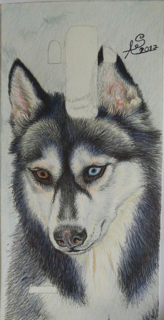 Siberian Husky Cover by Ceril91