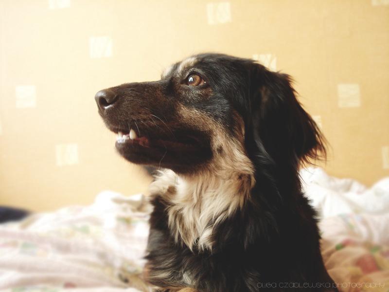 Happy dog by olgasha