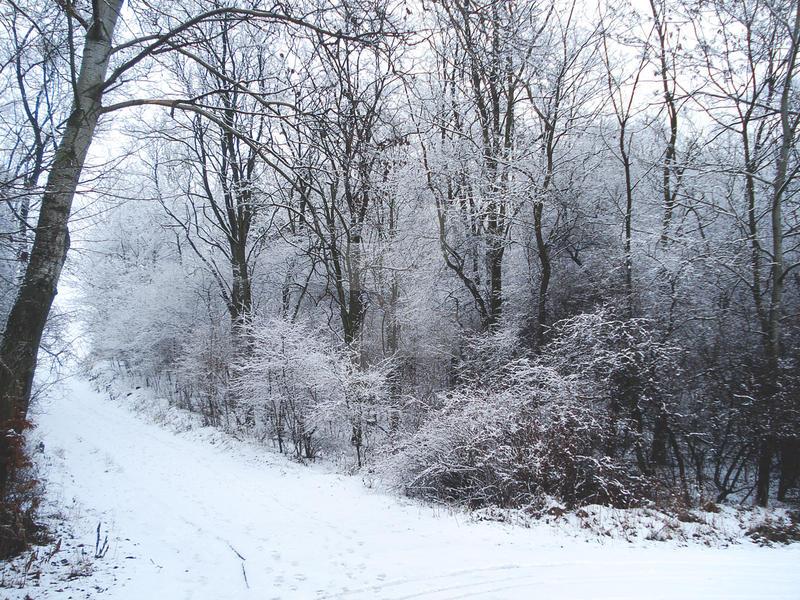 January by olgasha