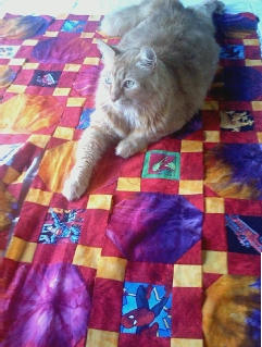 Caruso On LOgan's Quilt