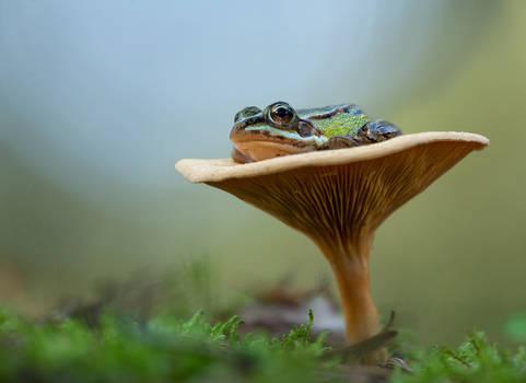 Frog legs on chanterelle