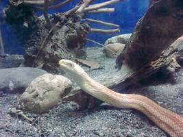 snake by Dj-Steaua