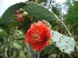 mexiko kaktus 1 by Dj-Steaua