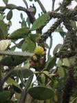 mexiko kaktus 3 by Dj-Steaua