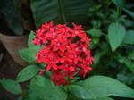 flower 5 by Dj-Steaua