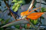 Flower 04 by Dj-Steaua