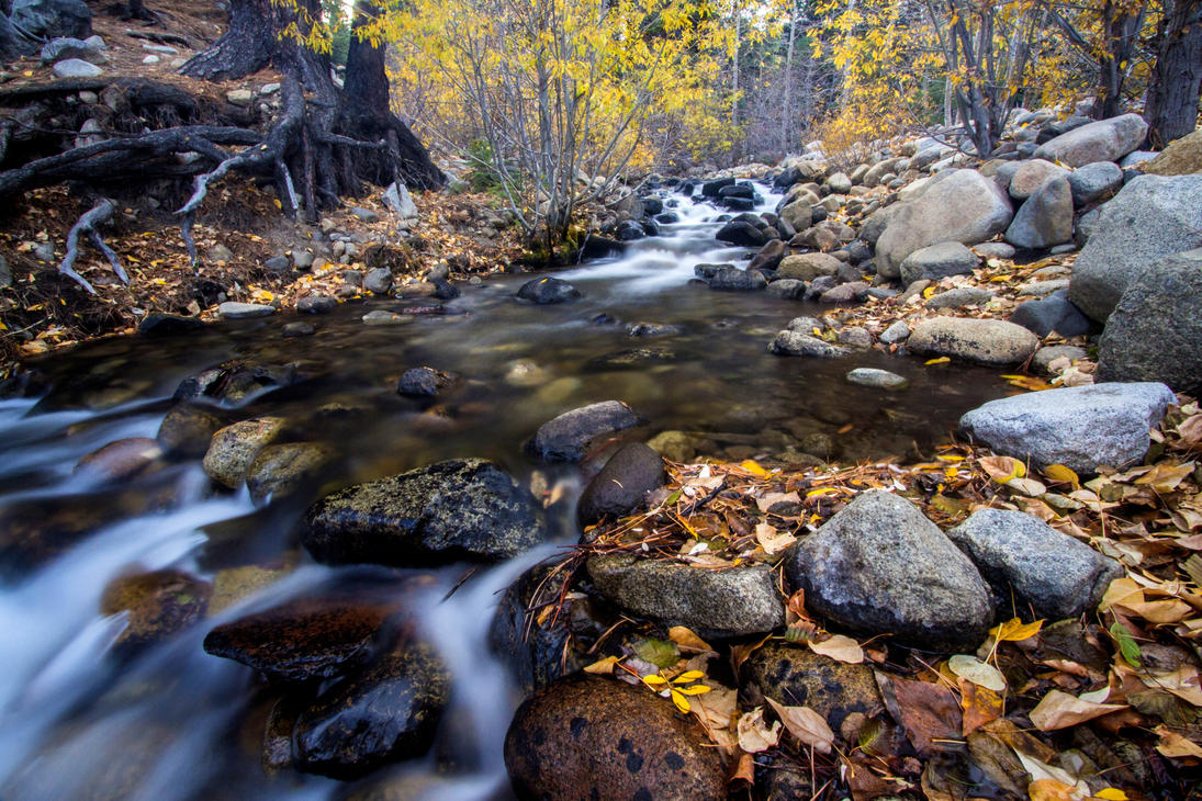 Galena Creek, Nevada. by sellsworth