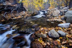 Galena Creek, Nevada. by sellsworth