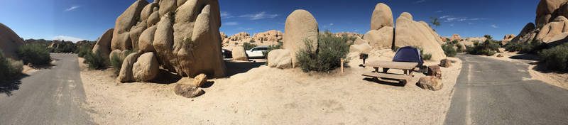 Joshua Tree by roupend