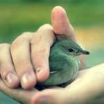 The Sparrow by recepgulec