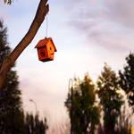 The birds-nest by recepgulec