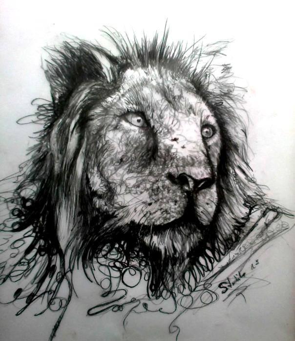 lion sketch by red of rose art c s on deviantart. Black Bedroom Furniture Sets. Home Design Ideas