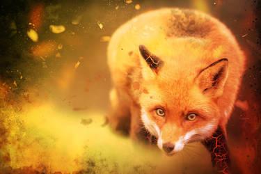 -- Fiery fox --