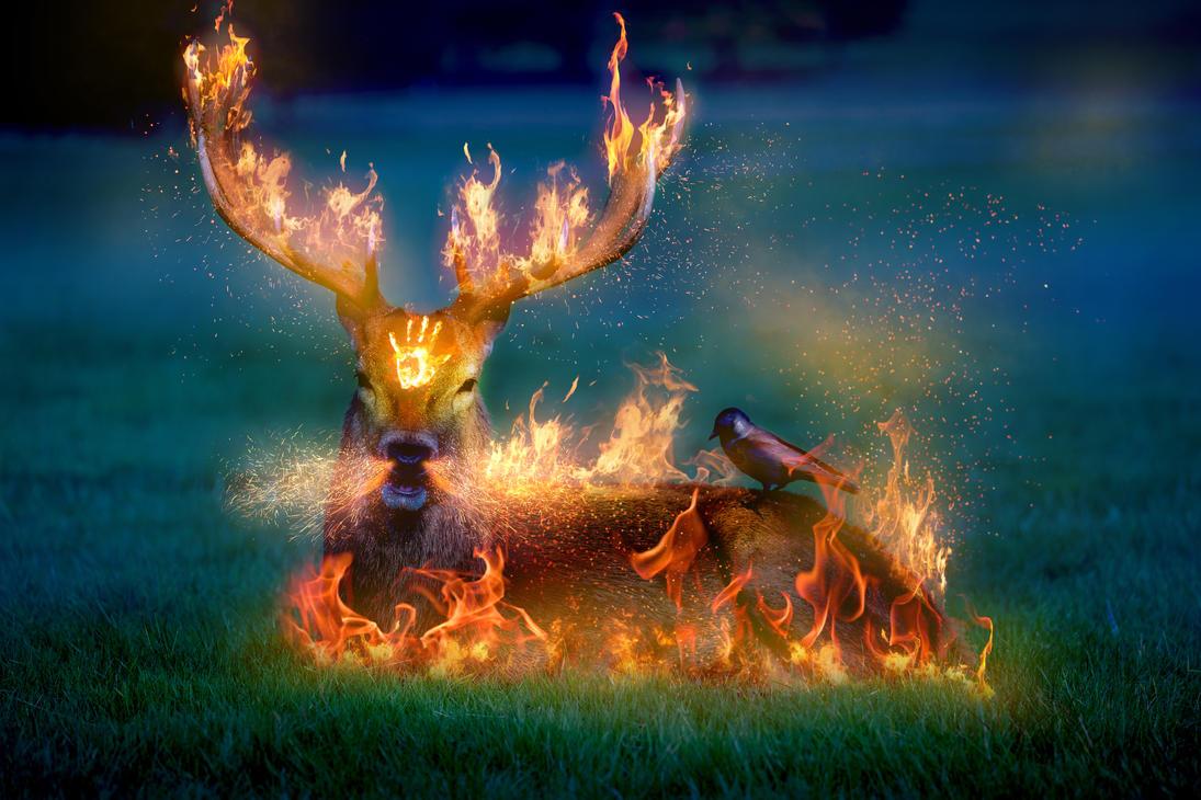 -- Fire starter -- by 0l-Fox-l0
