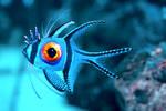 -- Eye fish --