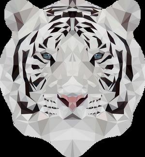 -- White tiger --