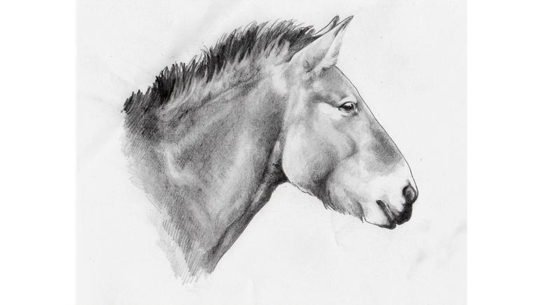Przewalski's horse by icagic