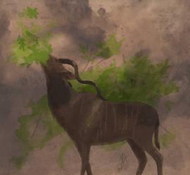 Kudu by Cedarbird