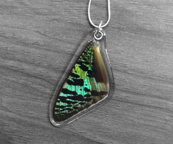Real Sunset Moth Wing Necklace by TheButterflyBabe