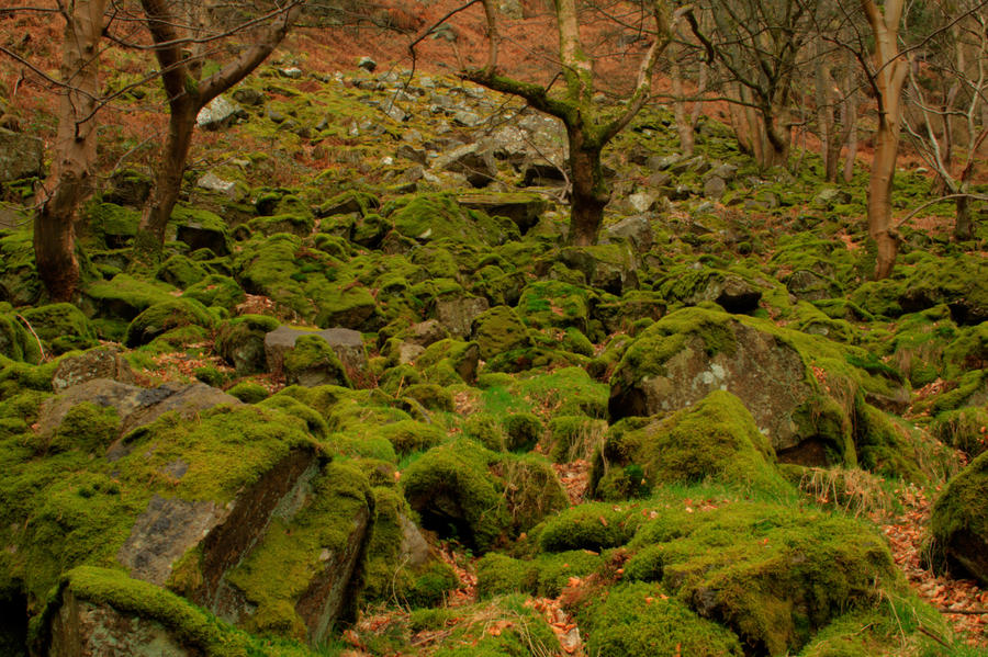 Mossy Rocks near Pistyll Rhaeadr Waterfall by TazPoltorak