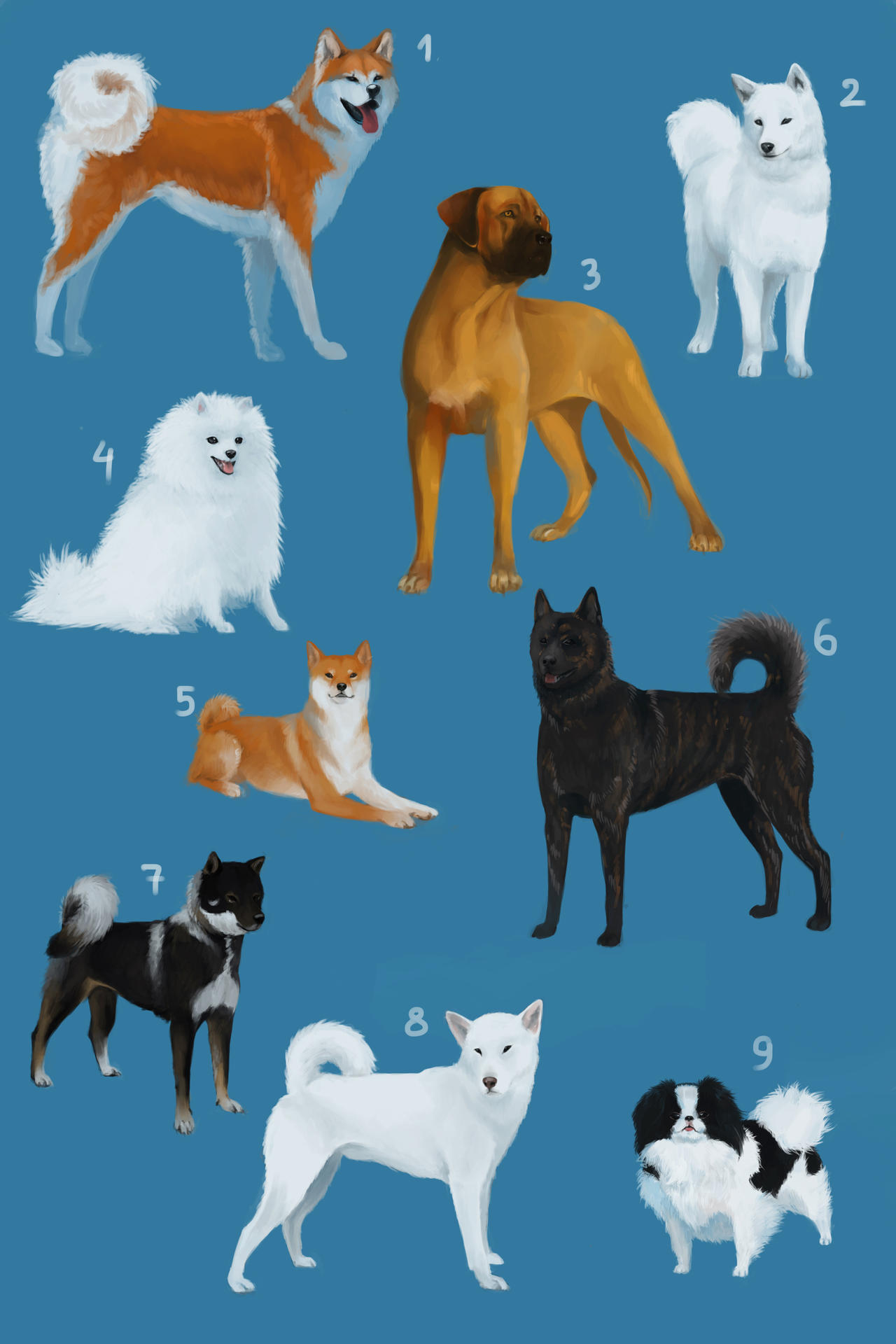 Dog Breeds Names Starting With S