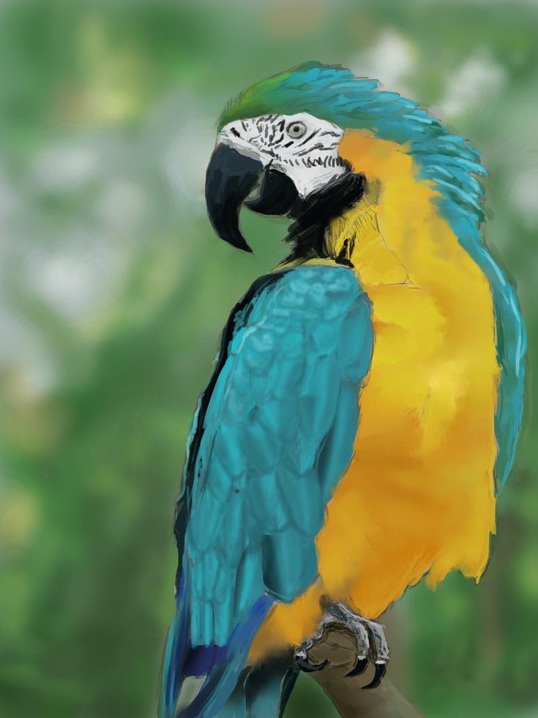 Parrot #3 by NickJ2598