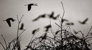 .... Birds...................