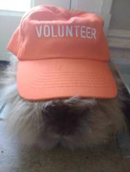 My rabbit is a volunteer by Blaria95