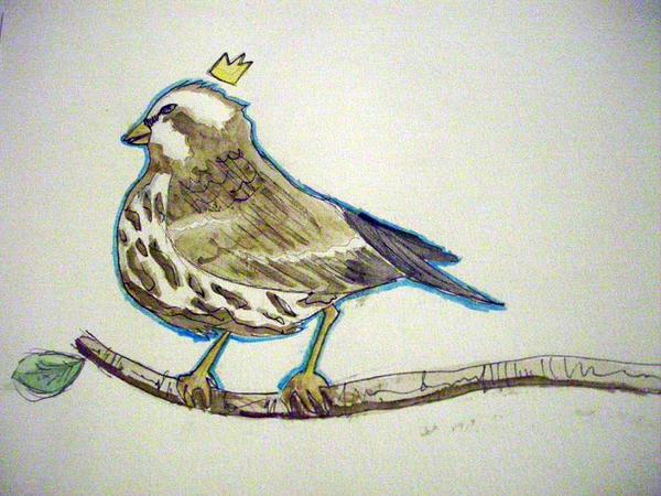 King Finch by kirimon