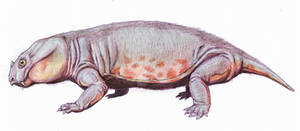 Pristerodon mirabilis