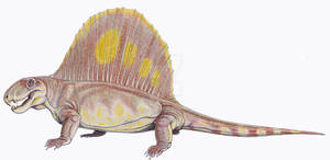 Dimetrodon limbatus