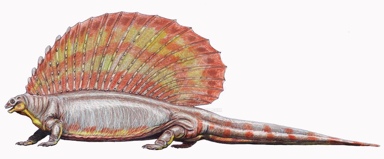 Edaphosaurus cruciger by DiBgd on DeviantArt