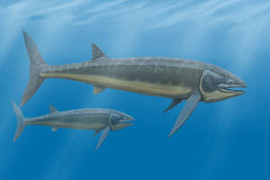 Bonnerichthys gladius by DiBgd