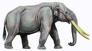 Stegomastodon platensis