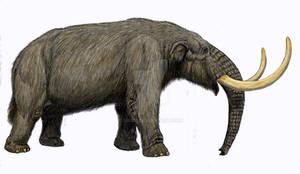 Mammut americanum