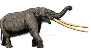 Mammut 'grangeri'