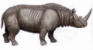 Stephanorhinus hemitoechus