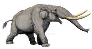 Mammut matthewi