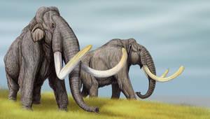 Steppe Mammoths