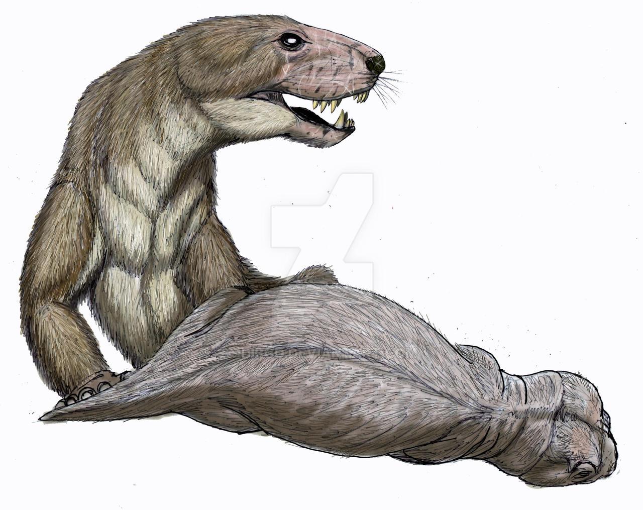 Megawhaitsia patrichiae